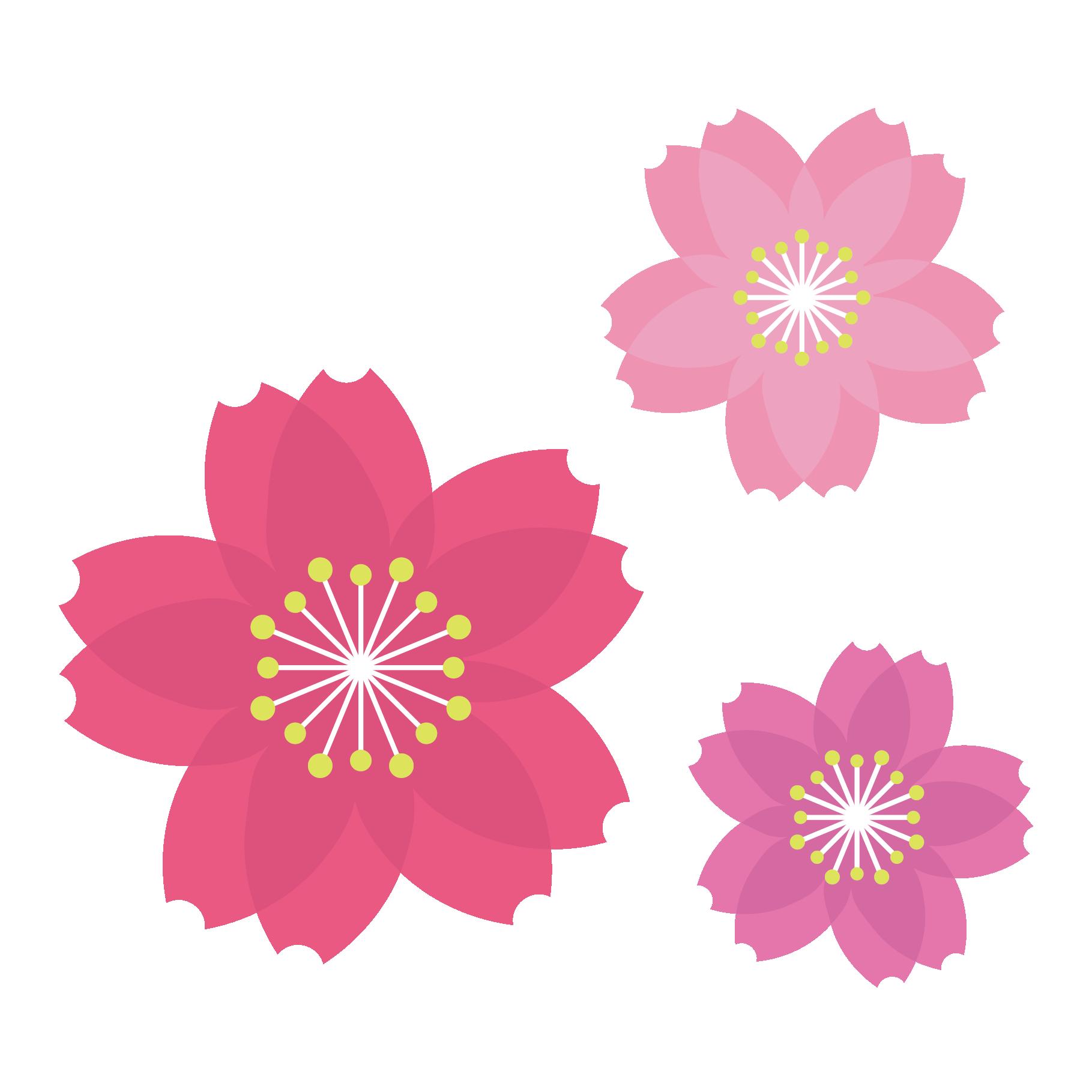 桜サクラさくらフリー の かわいい イラスト 商用フリー無料の