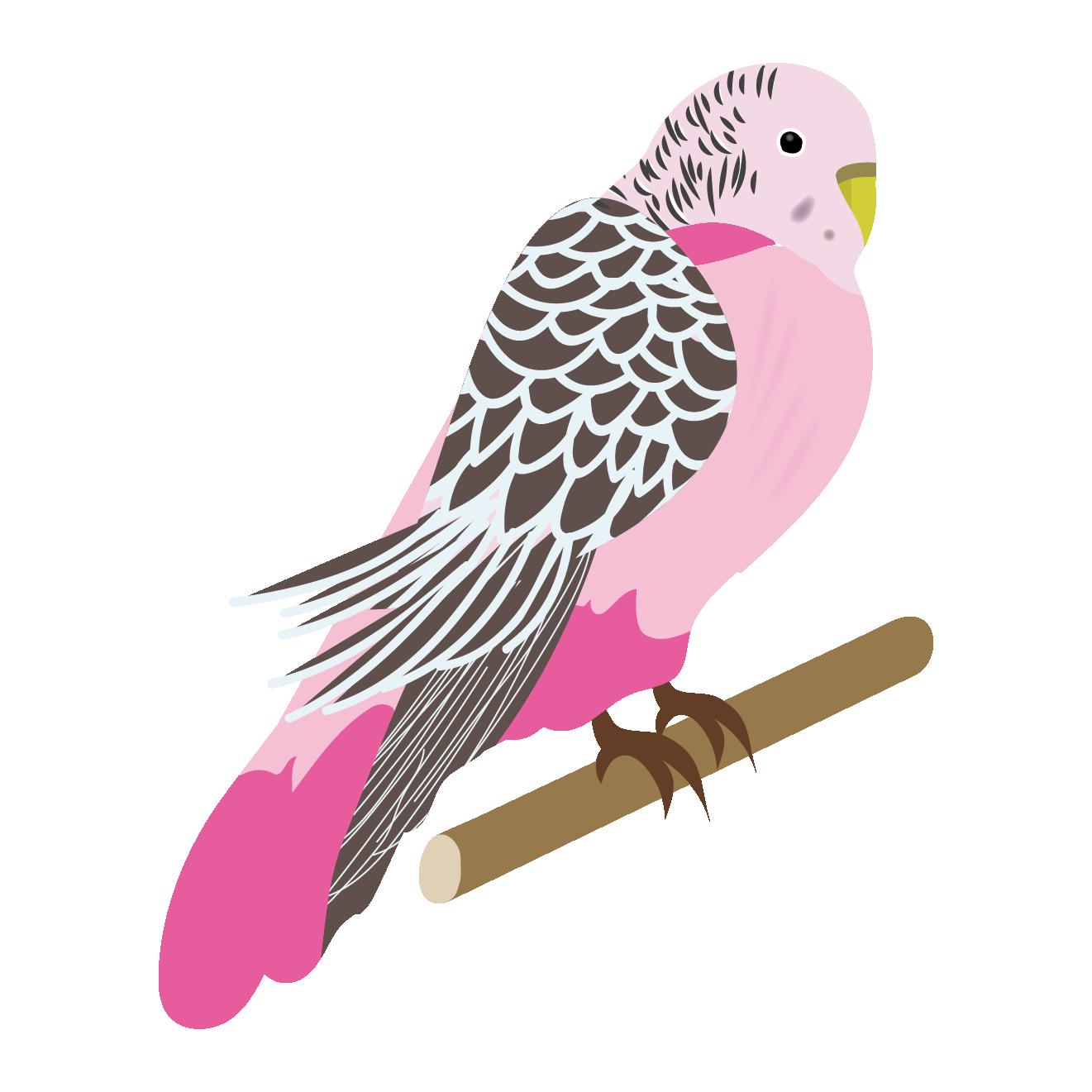 インコ イラストピンク色 セキセイ インコ 商用フリー無料の
