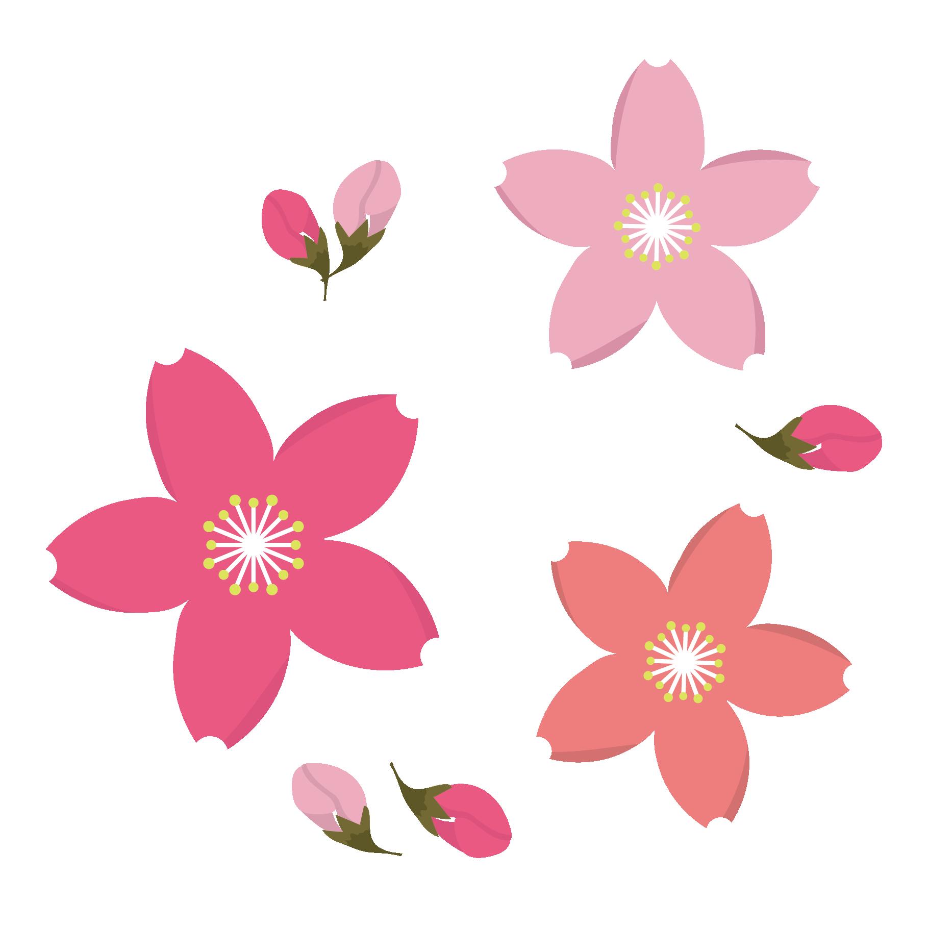 カワイイ!桜(サクラ)の花と蕾(つぼみ)のイラスト! | 商用フリー