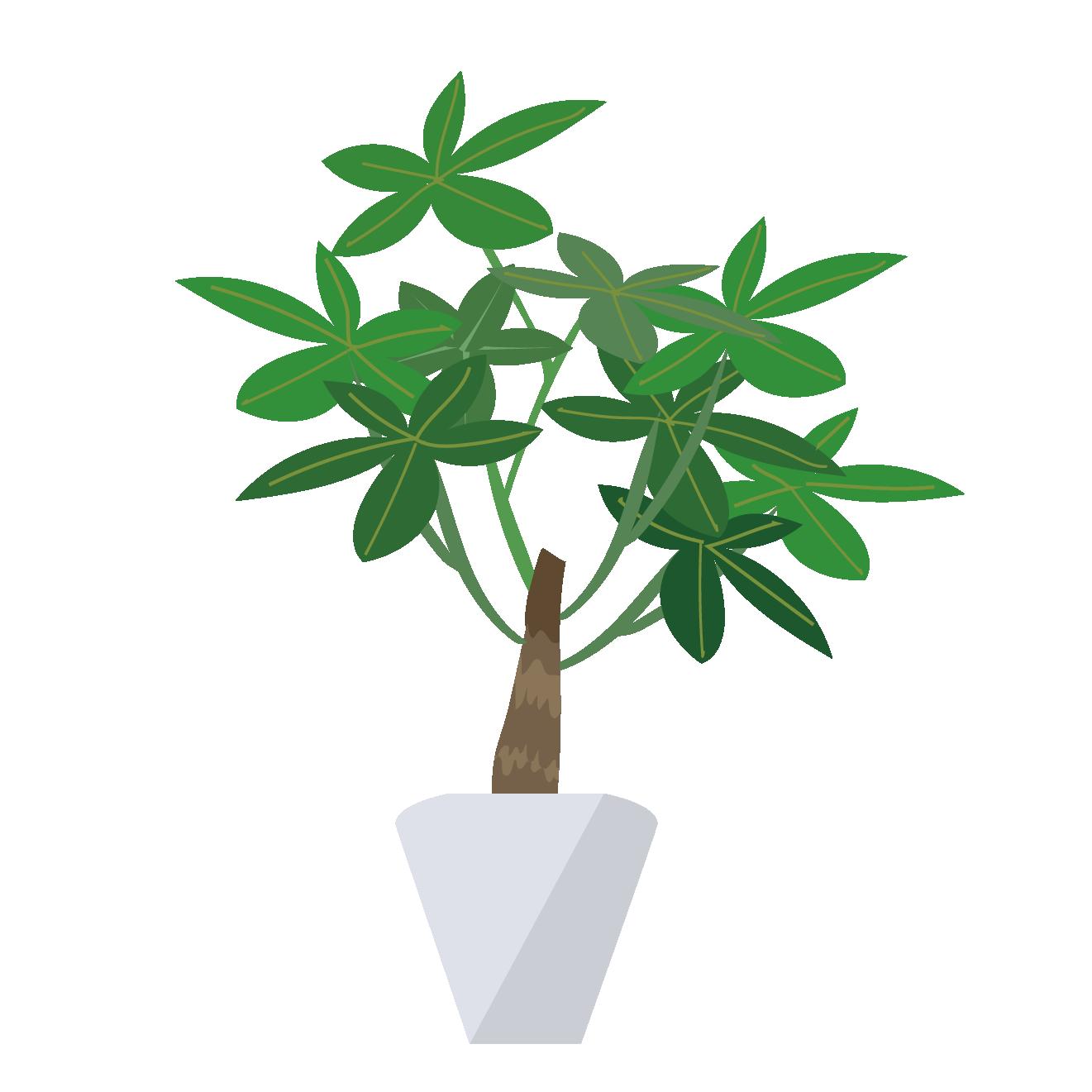 観葉植物パキラのイラスト 商用フリー無料のイラスト素材なら