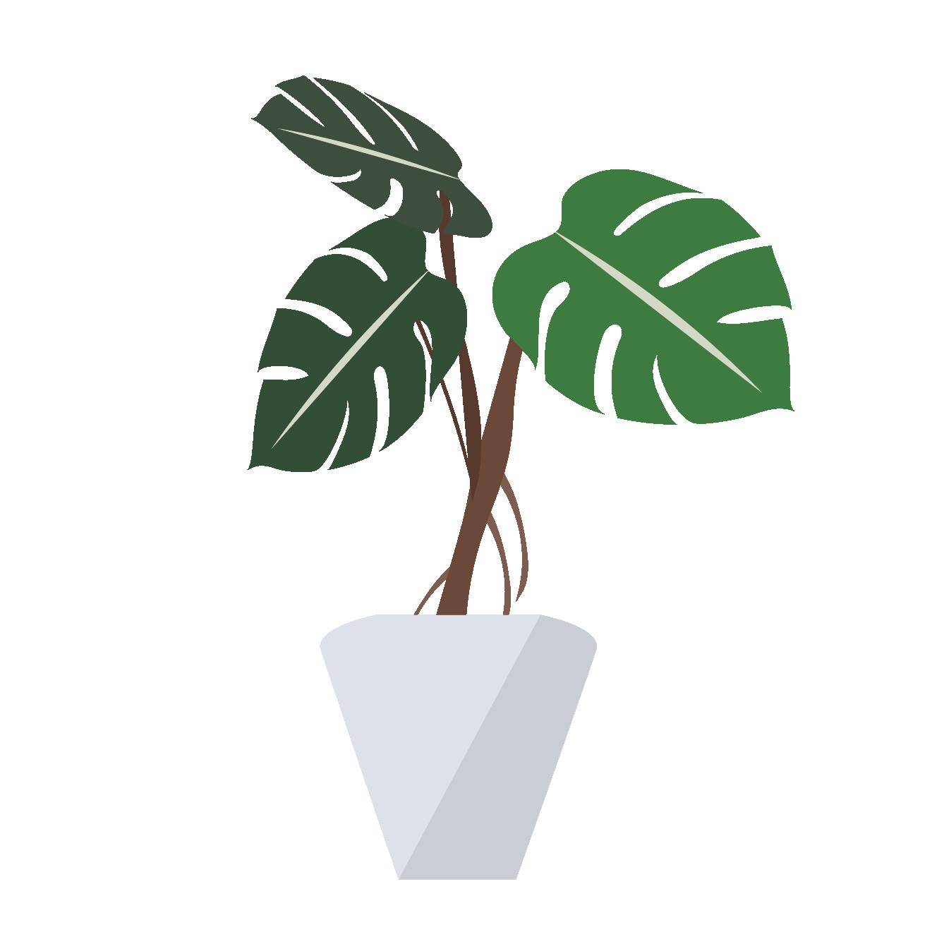観葉植物モンステラのイラスト 商用フリー無料のイラスト素材