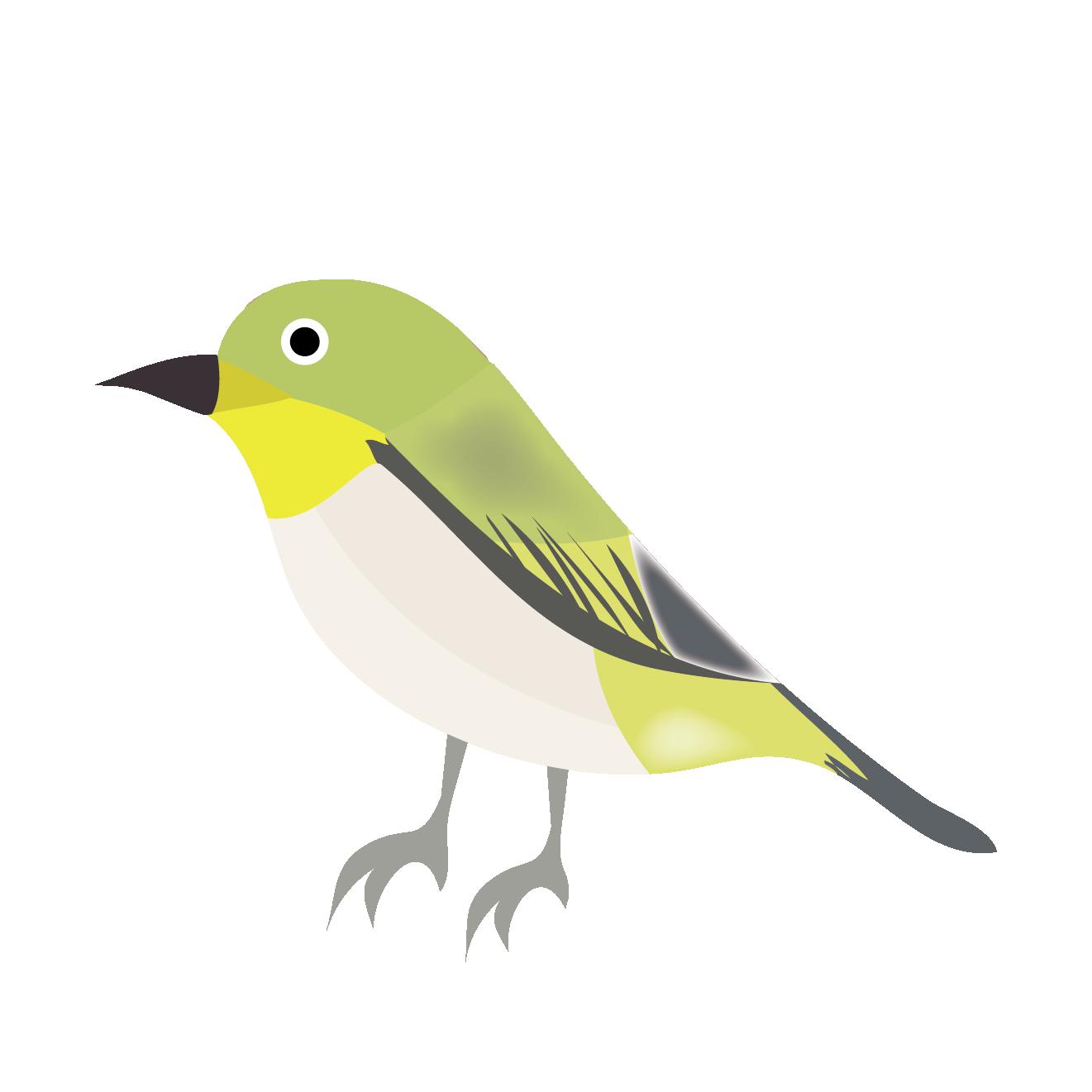 かわいいメジロ 鳥のイラスト | 商用フリー(無料)のイラスト素材なら