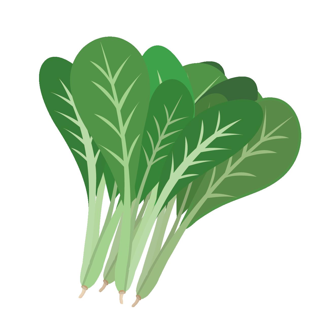 小松菜のイラスト 野菜 商用フリー無料のイラスト素材なら