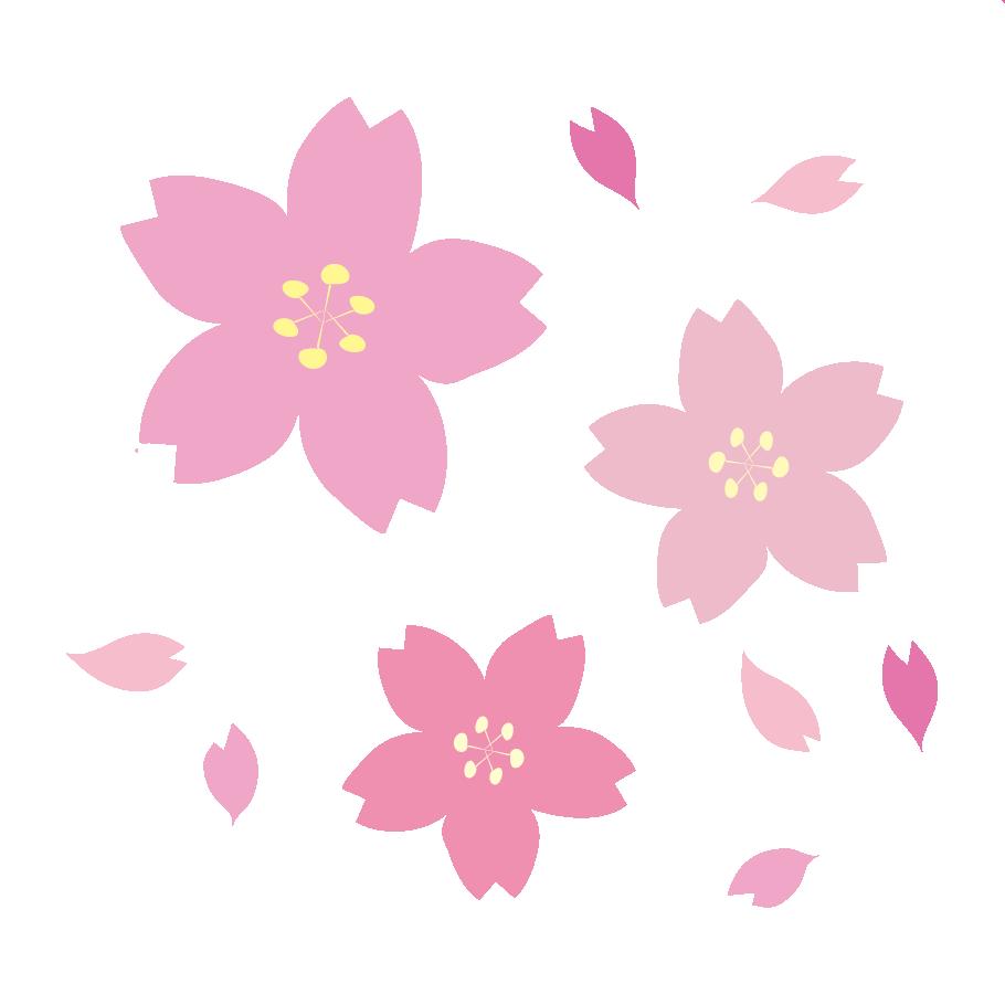 おしゃれで綺麗な 桜サクラのイラスト 商用フリー無料のイラスト