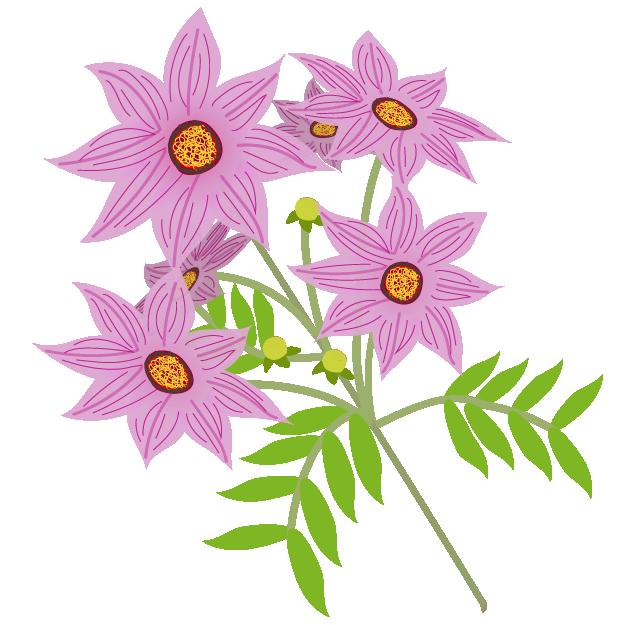 皇帝ダリアコウテイ ダリアのお花秋の花イラスト 商用フリー