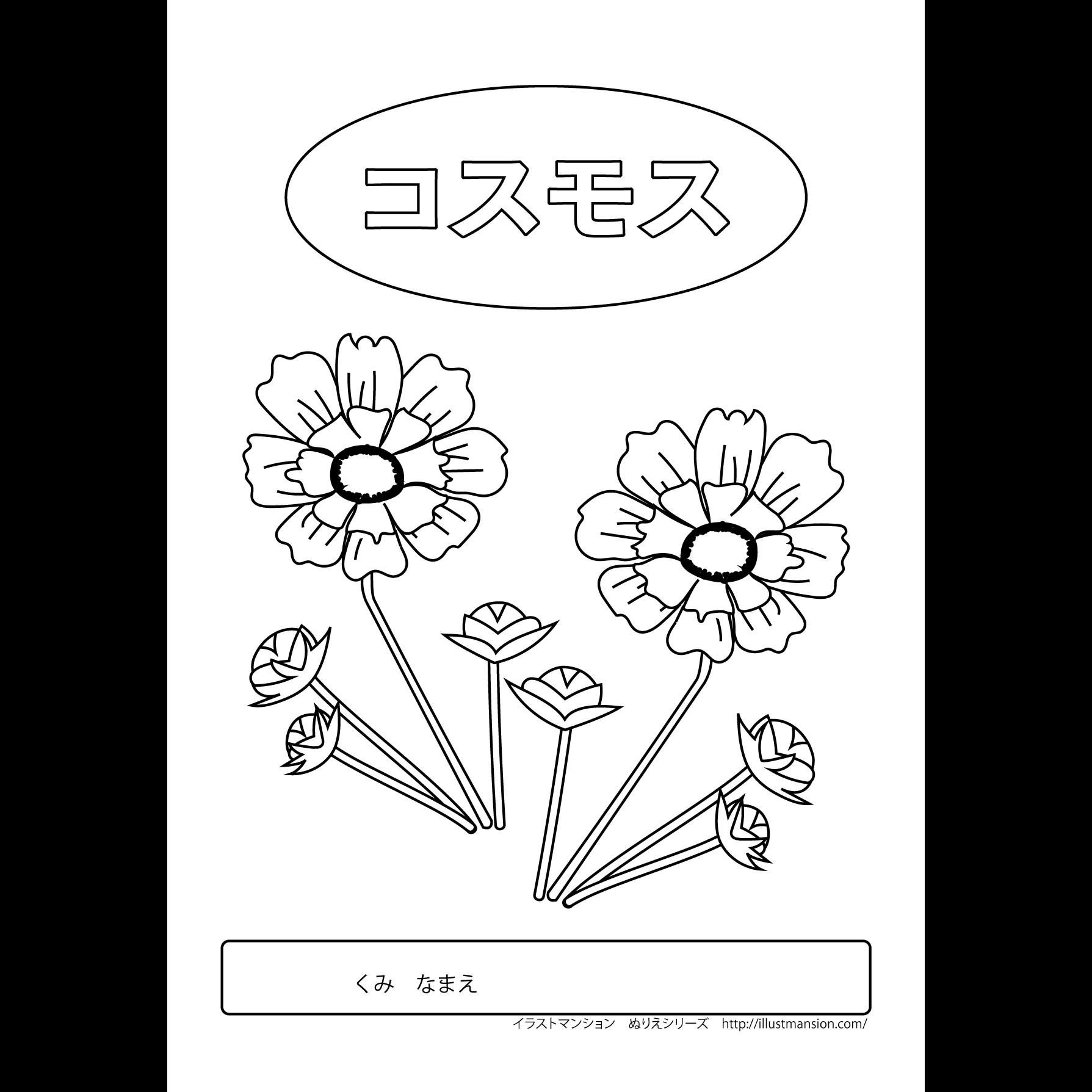 コスモスの 花 のかわいい塗り絵ぬりえイラスト 商用フリー無料