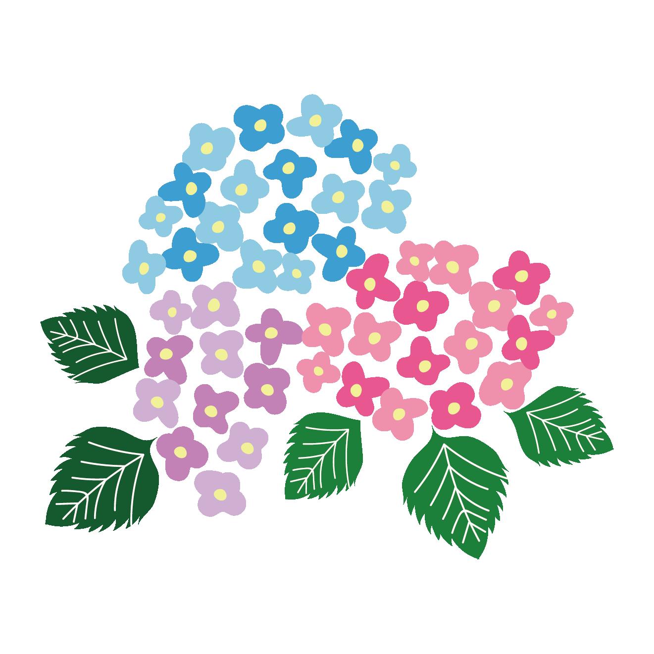梅雨色鮮やかな紫陽花アジサイ フリー イラスト 商用フリー無料
