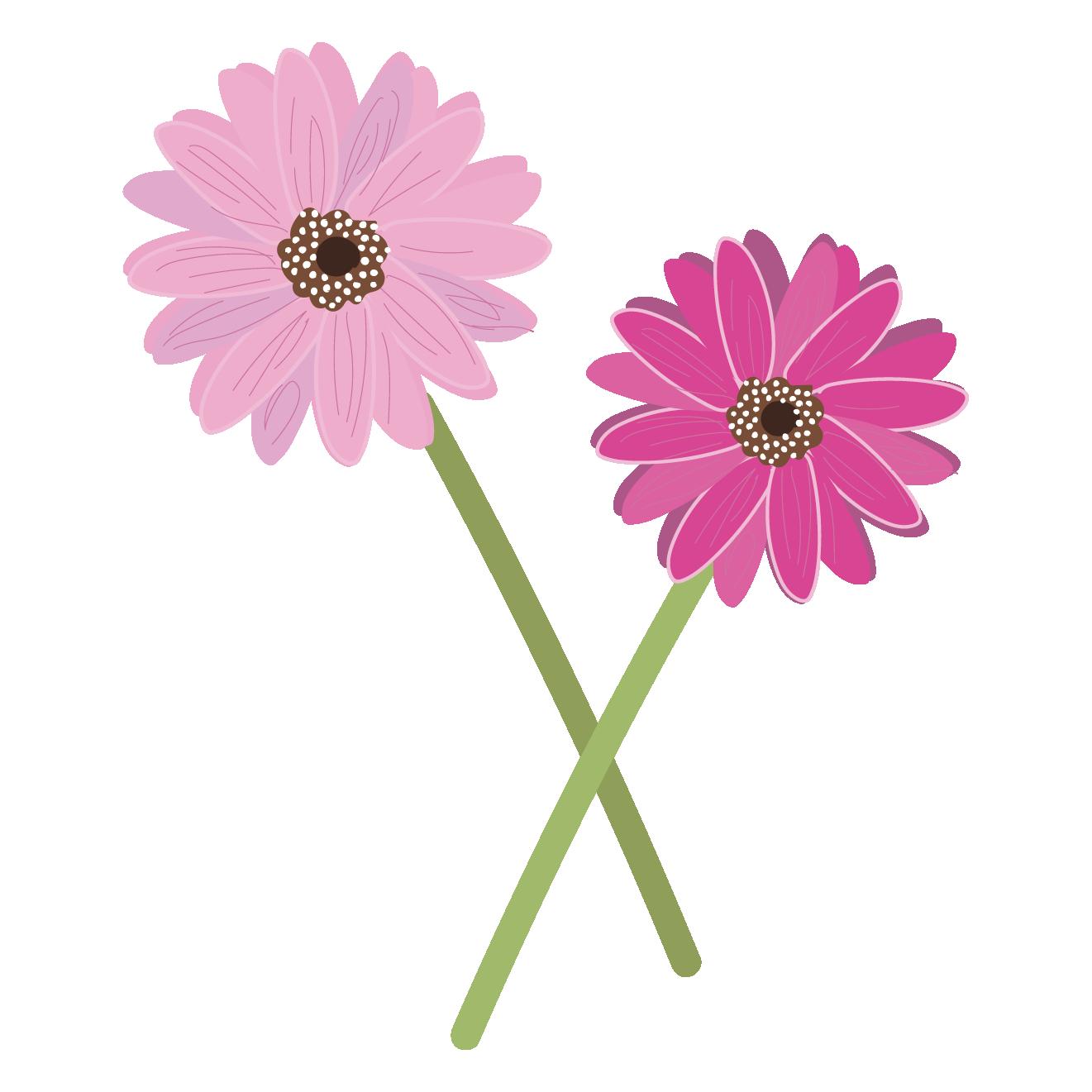 花かわいいガーベラの フリー イラスト 商用フリー無料のイラスト