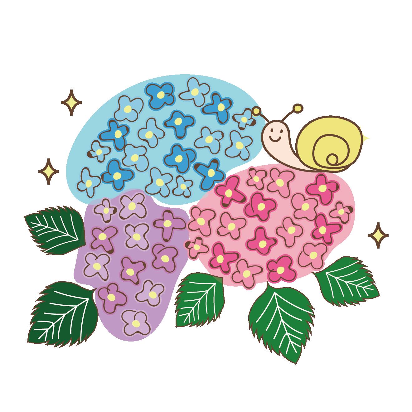 【梅雨】紫陽花(アジサイ)とカタツムリのイラスト