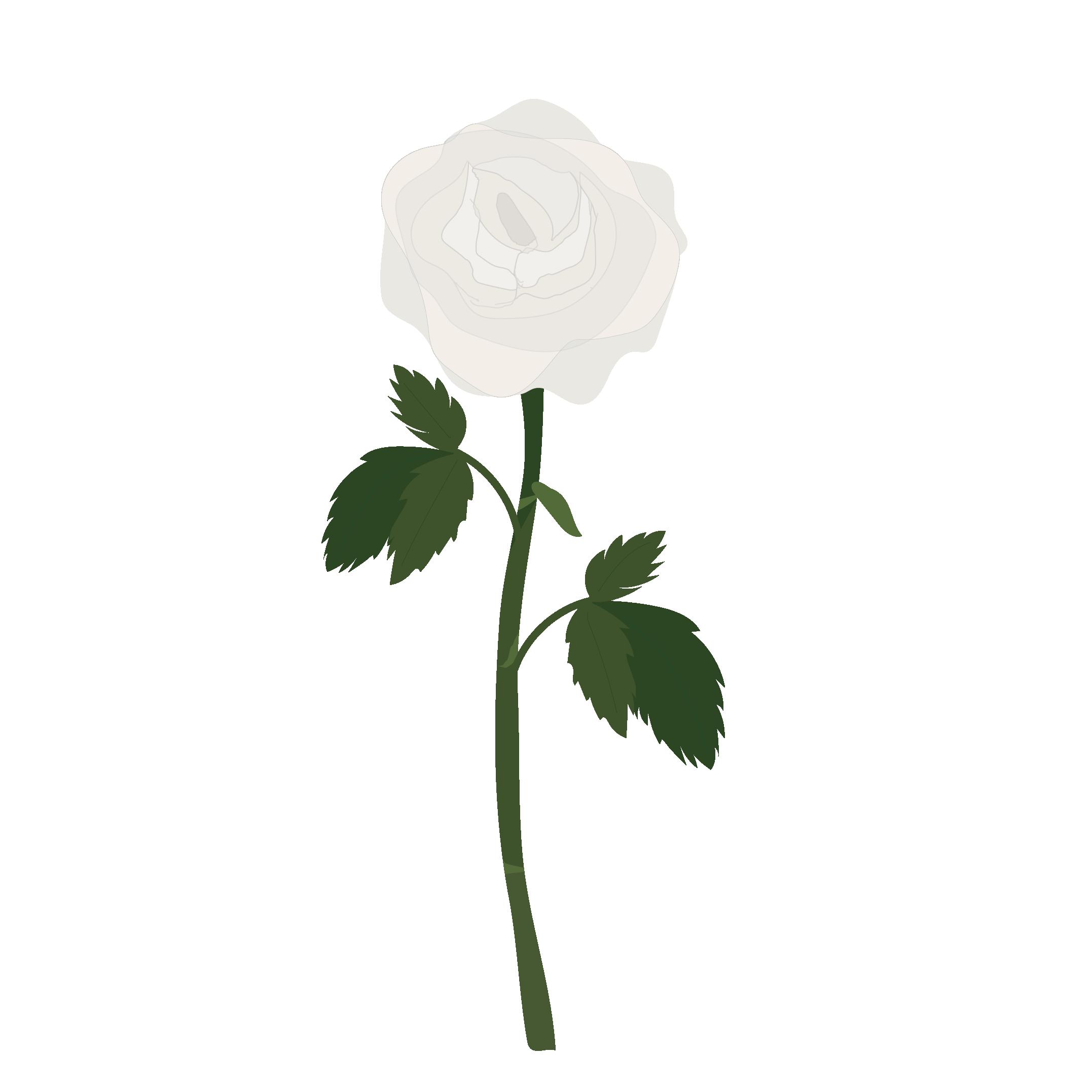 一輪の白い薔薇(ばら・バラ)の フリー イラスト