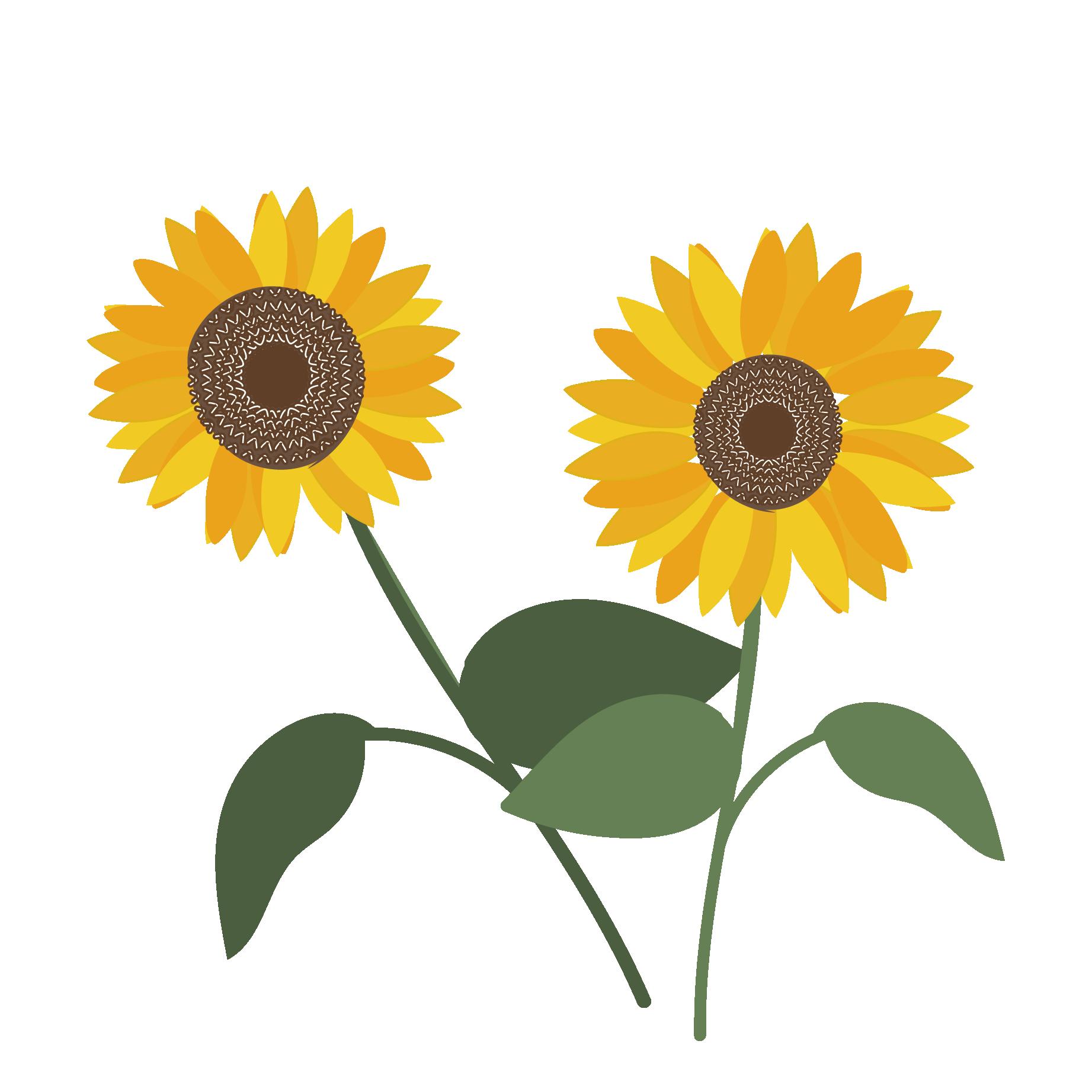 夏の花】ひまわり(ヒマワリ)のイラスト | 商用フリー(無料)のイラスト