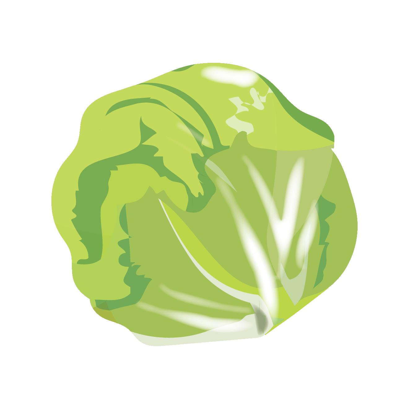 新鮮な丸ごと「レタス」のイラスト 【野菜】 | 商用フリー(無料)の