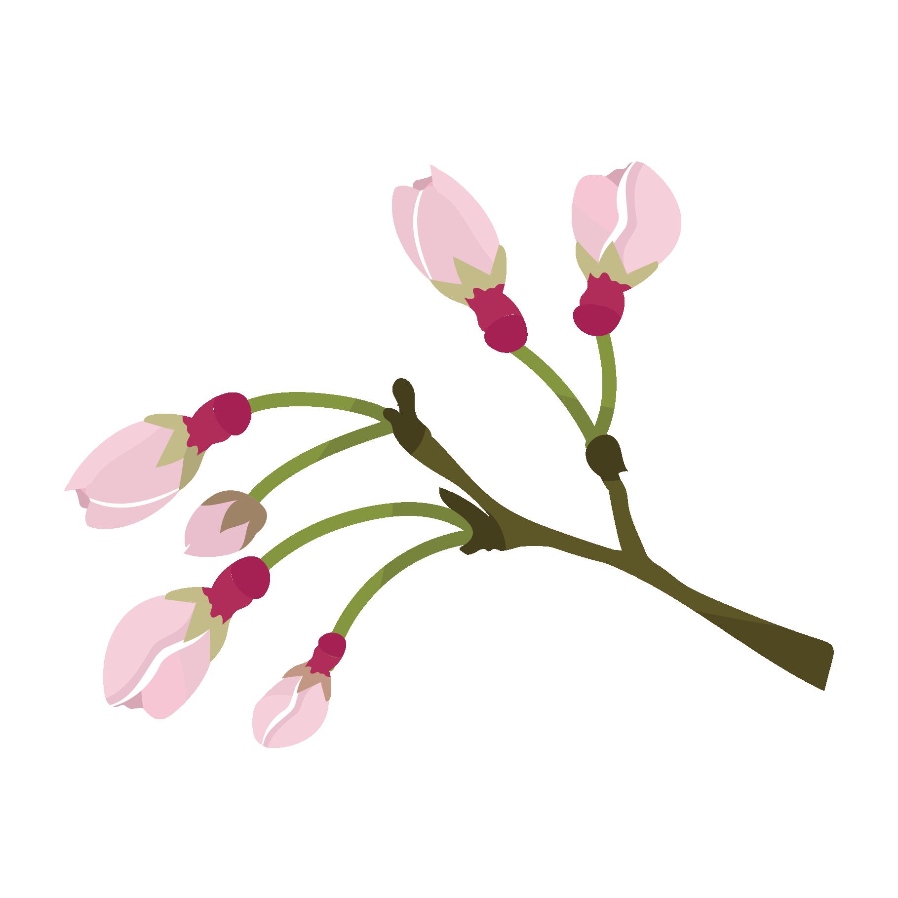 Cherry Blossoms かわいい桜(さくら・サクラ)の蕾(つぼみ)のイラスト 商用フリー 無料 のイラスト素材なら「イラストマンション」
