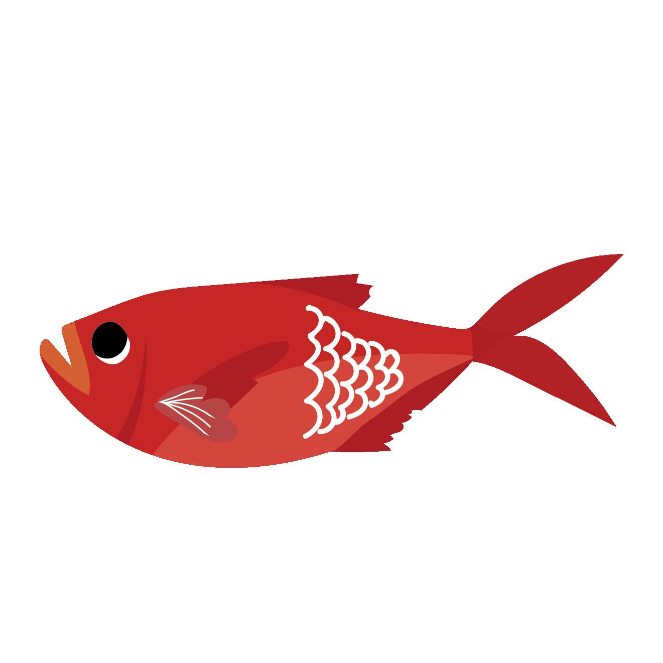 金目鯛(キンメダイ)のイラスト【魚】 | 商用フリー(無料)のイラスト