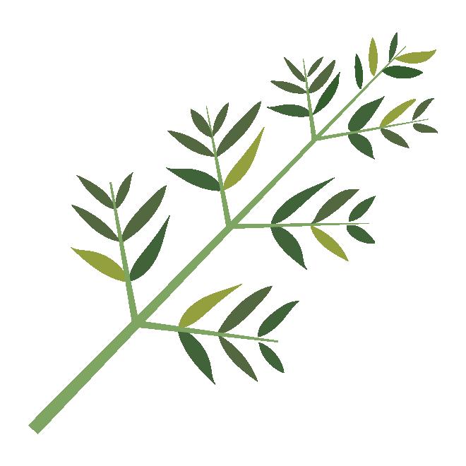 笹の葉(七夕ーたなばた)の 無料 イラスト