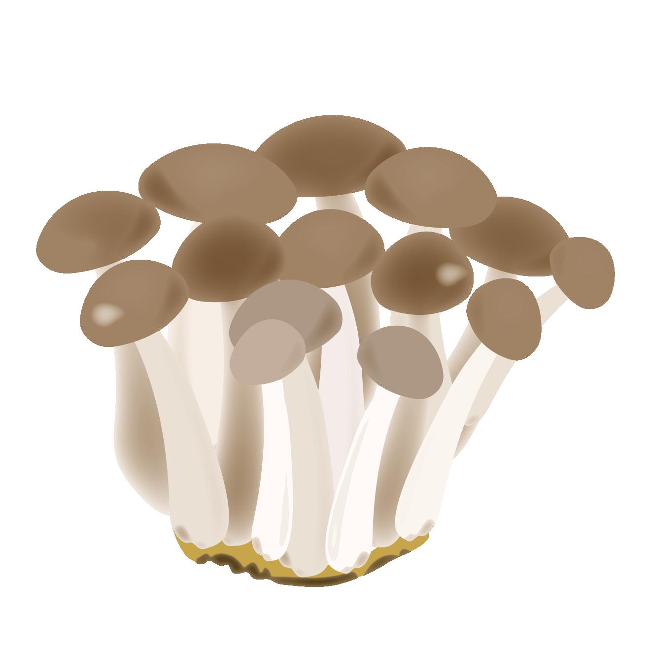 しめじきのこ菌類のイラスト 商用フリー無料のイラスト素材