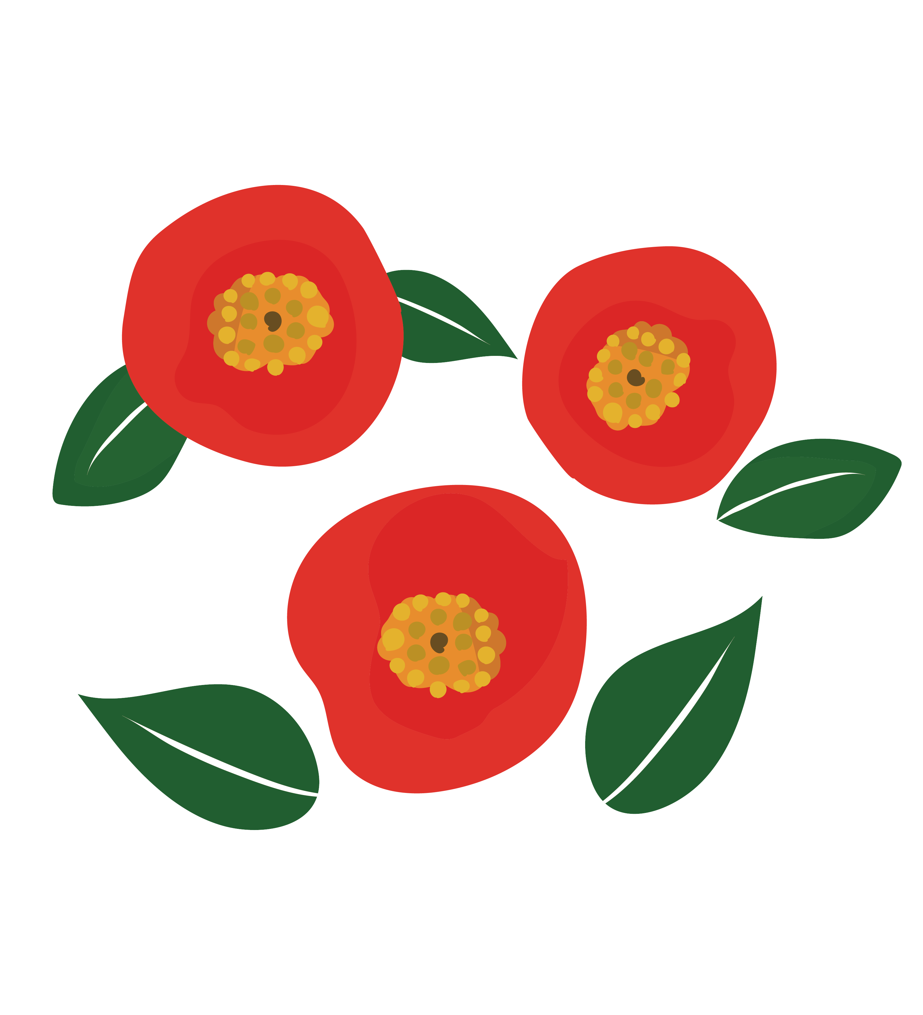 かわいい椿(つばき)のイラスト 【花・年賀状にも!】