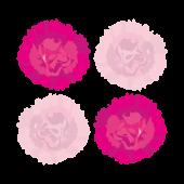 ピンクのカーネーションのお花のイラスト