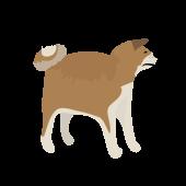 かわいい!犬(秋田犬・いぬ・ドッグ)の ちょっと リアル イラスト