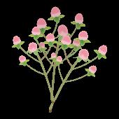 ピンクのかわいいお花♪ ヒペリカムの フリー イラスト