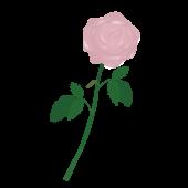 一輪のピンクの薔薇(バラ)の フリー イラスト