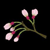 かわいい桜(さくら・サクラ)の蕾(つぼみ)のイラスト
