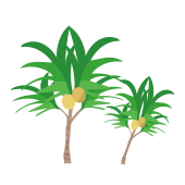常夏!椰子・ヤシの木のイラスト