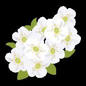小さなお花がいっぱい!ユキヤナギの フリー イラスト