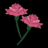 母の日の花 ピンク(桃色の)のかわいい!無料 カーネーション イラスト