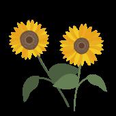 【夏の花】ひまわり(ヒマワリ)の フリー イラスト