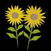 【夏の花】向日葵(ヒマワリ)のイラスト