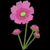 【花】コスモスの かわいい フリー イラスト