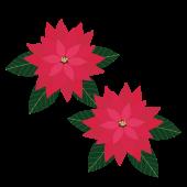 ポインセチア(ぽいんせちあ)の 無料 イラスト【クリスマス】