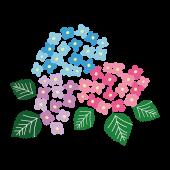 【梅雨】色鮮やかな紫陽花(アジサイ) フリー イラスト