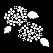 綺麗♪紫陽花(あじさい)白黒 の無料 イラスト