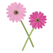 【花】かわいいガーベラの フリー イラスト