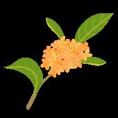 金木犀・キンモクセイ(英語:Fragrant olive)秋の花の イラスト