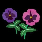 ピンクと紫色のパンジー(花)のイラスト
