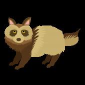 かわいい! たぬき(英語:raccoon dog)の フリー イラスト